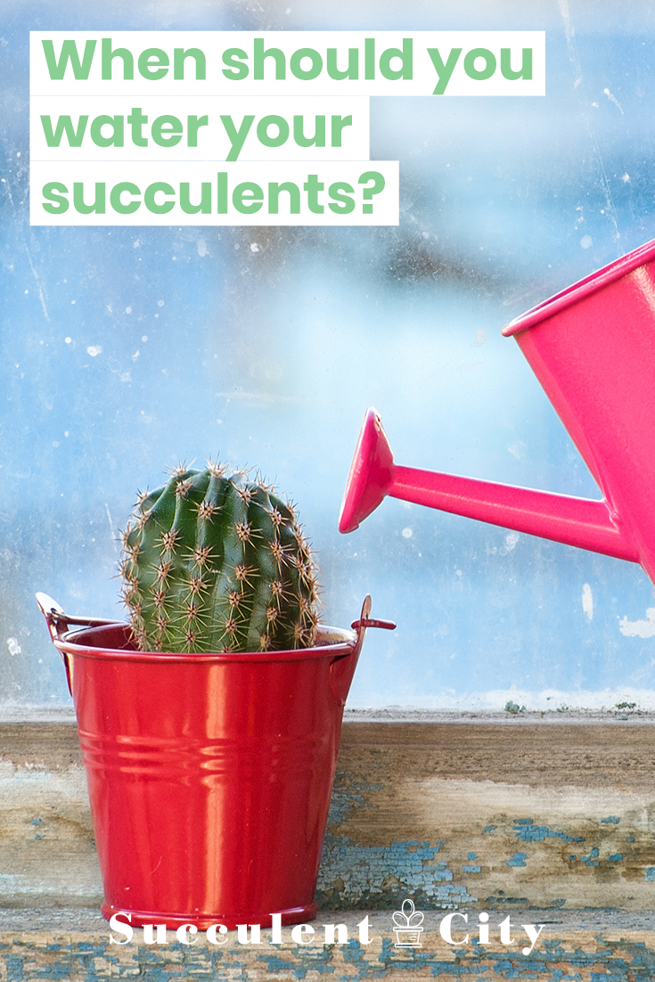 Ever wondered when you should water your succulents? Check out this blog, it\'ll give you all the details of how much to water them, when to water them, how often to water them and more! Don\'t let your succulents dry out.