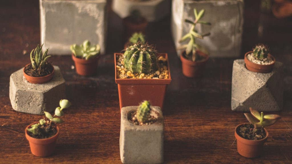 When you should water your succulents and how often