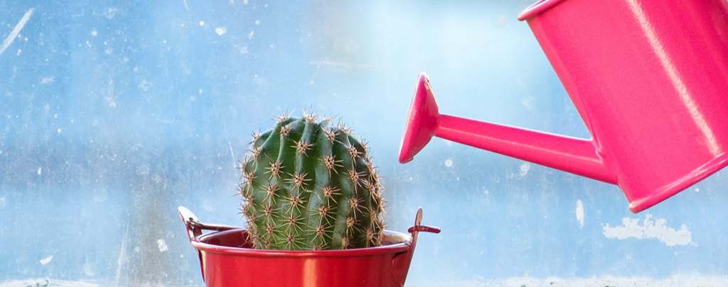 When you should water your succulent plants