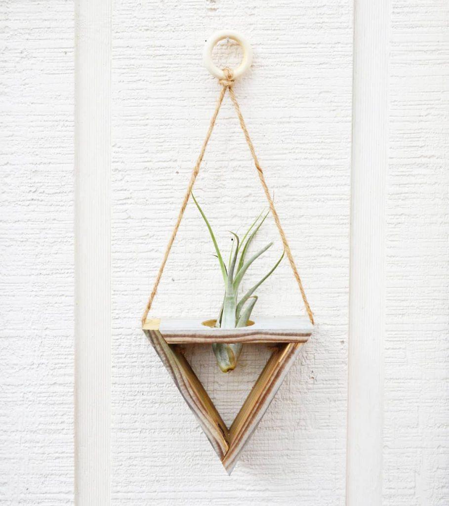 Hanging Air Succulent Plant