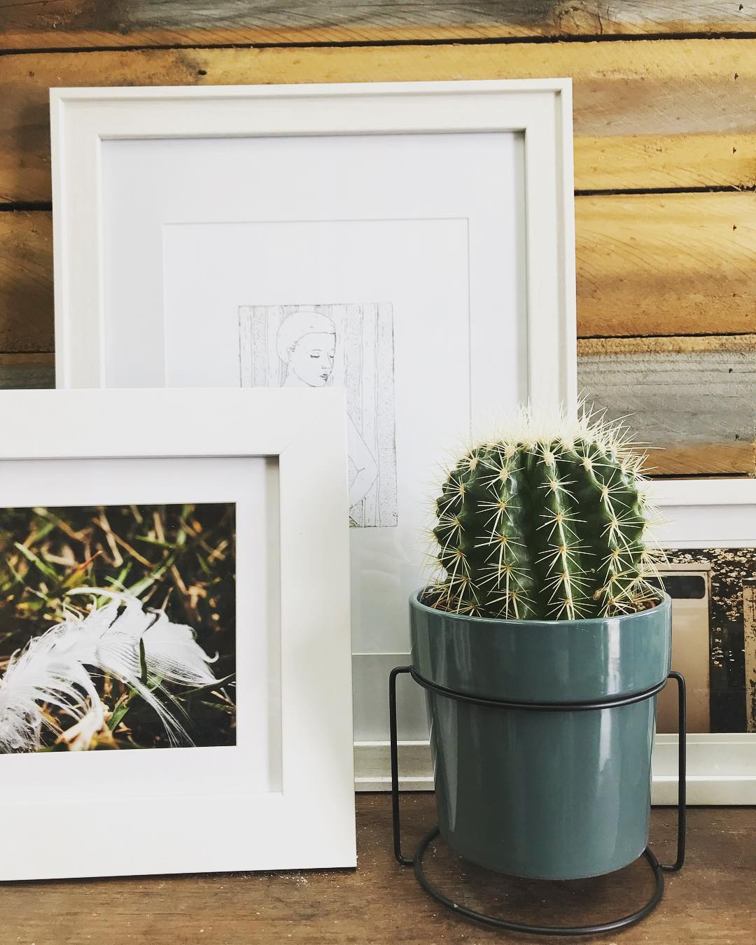 Golden Barrel Cactus and Picture Frames