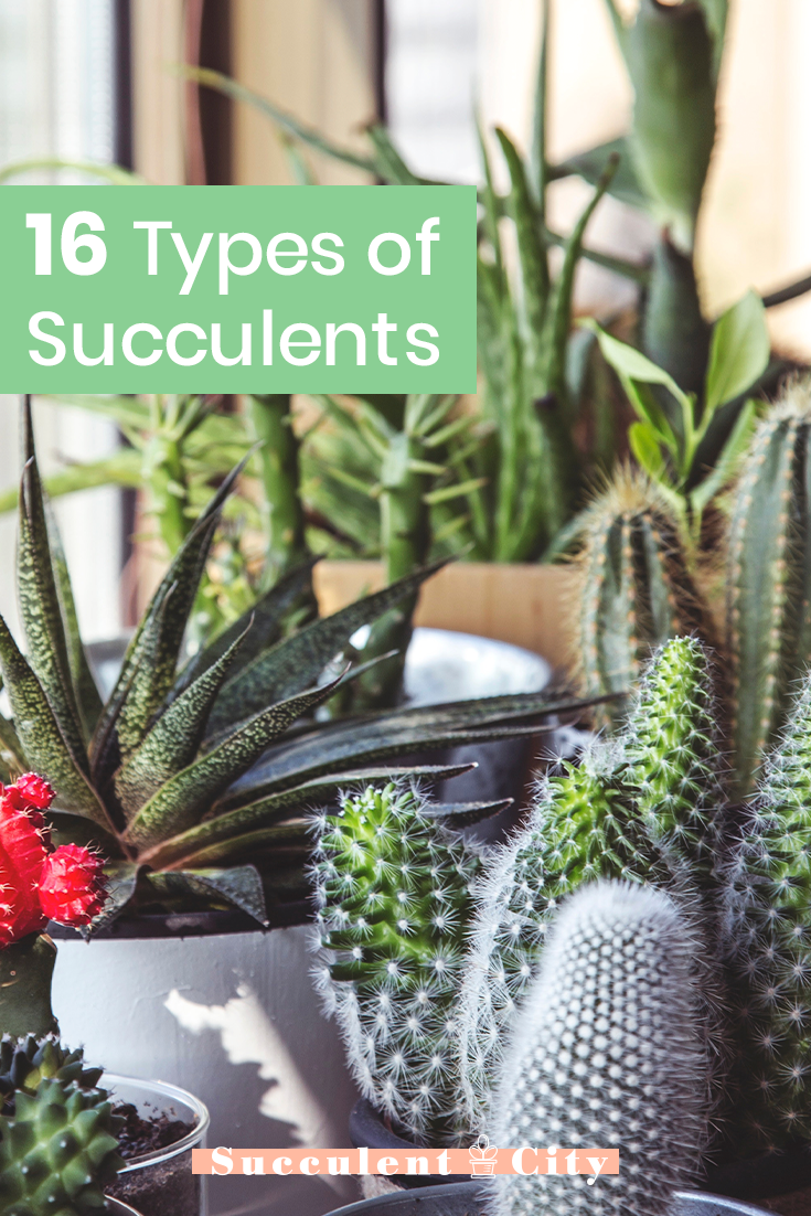 16 Types of Succulents You Can Add to Your Garden