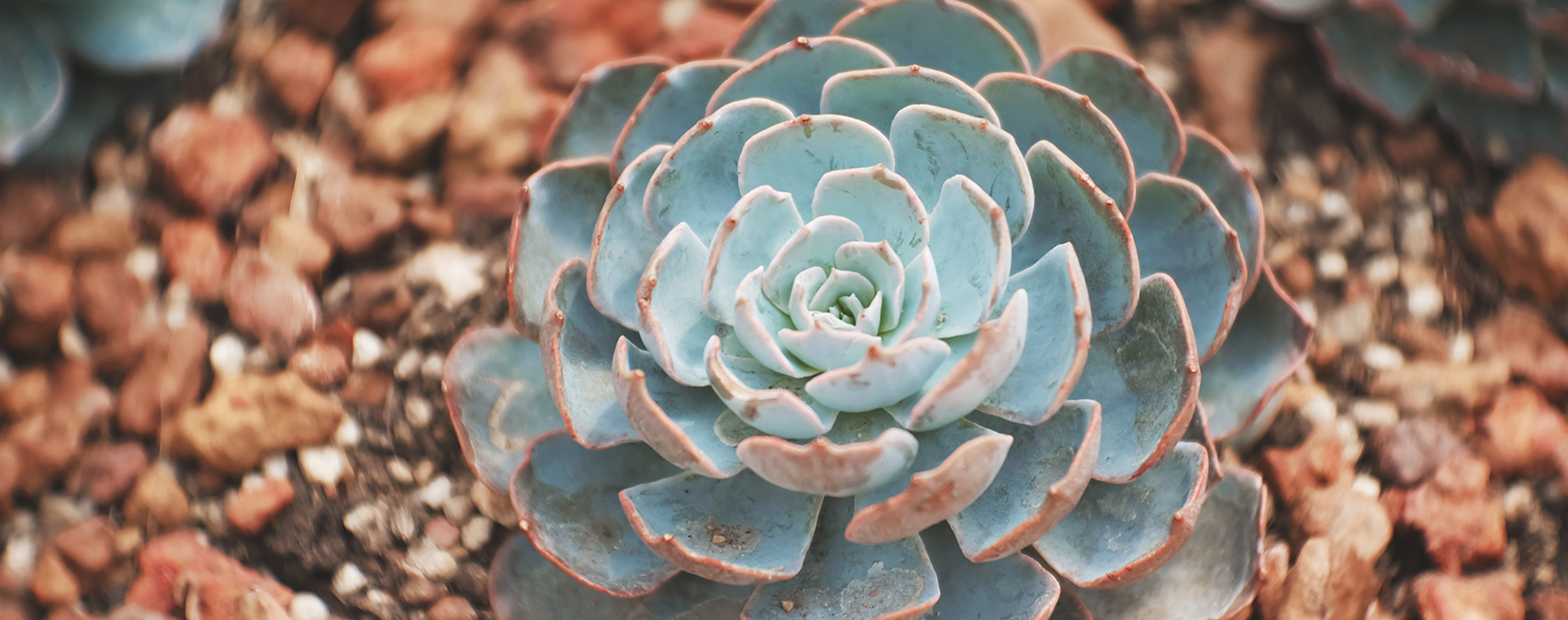 8 Rare Succulents Worth Exploring