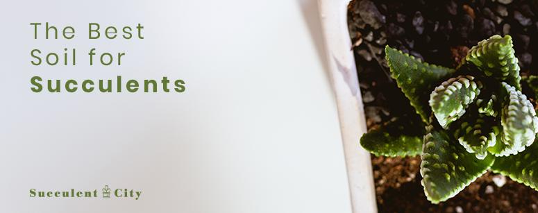 The Best Soil for Succulent Plants