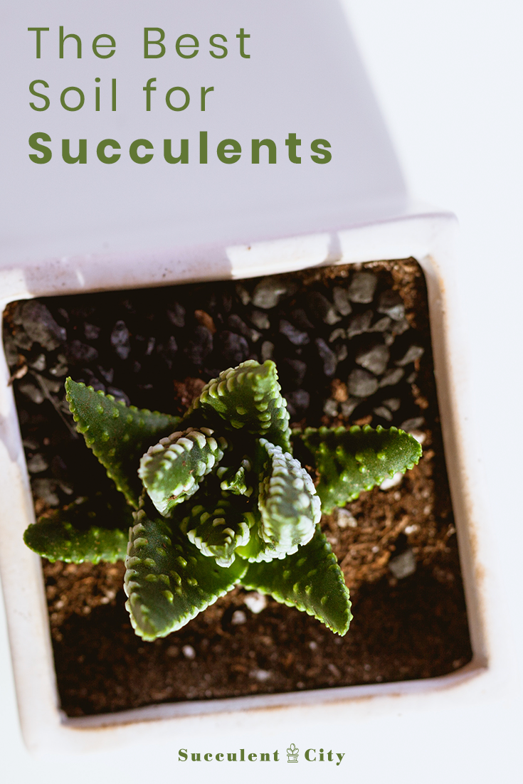 Best Soil for Succulents -Succulents Lovers Guide