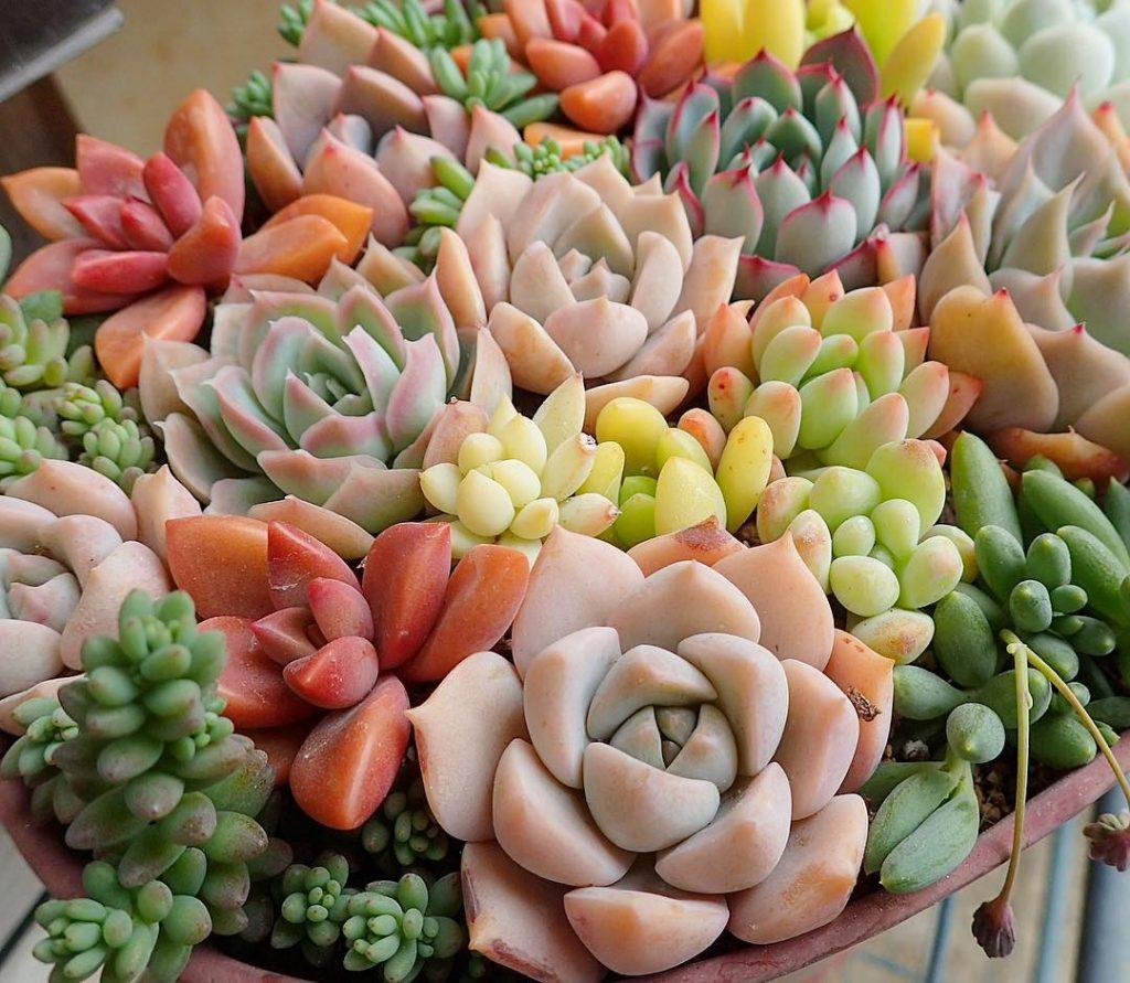 Succulent plants colorful