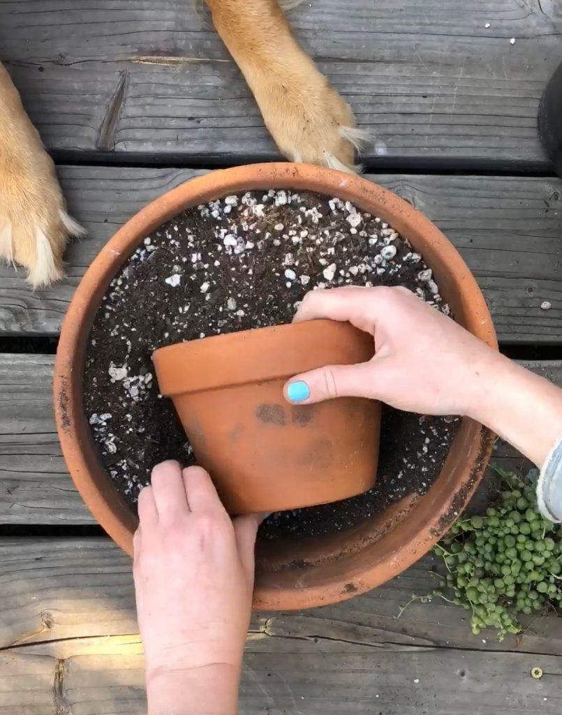 Succulent pot trend instagram