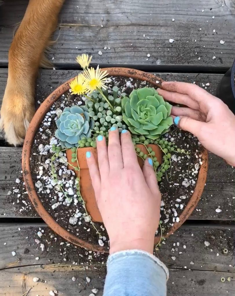 Succulent pot trend on instagram