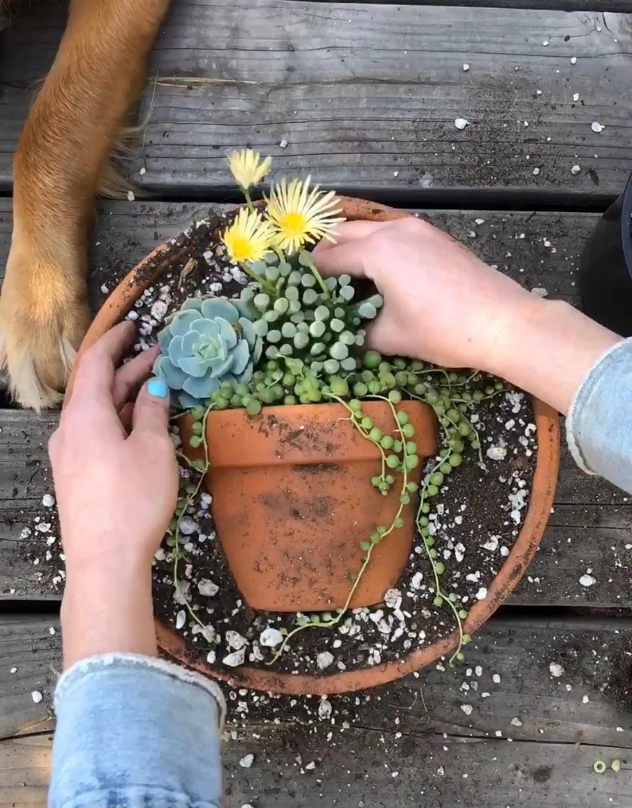 Succulent pot trend on instagram