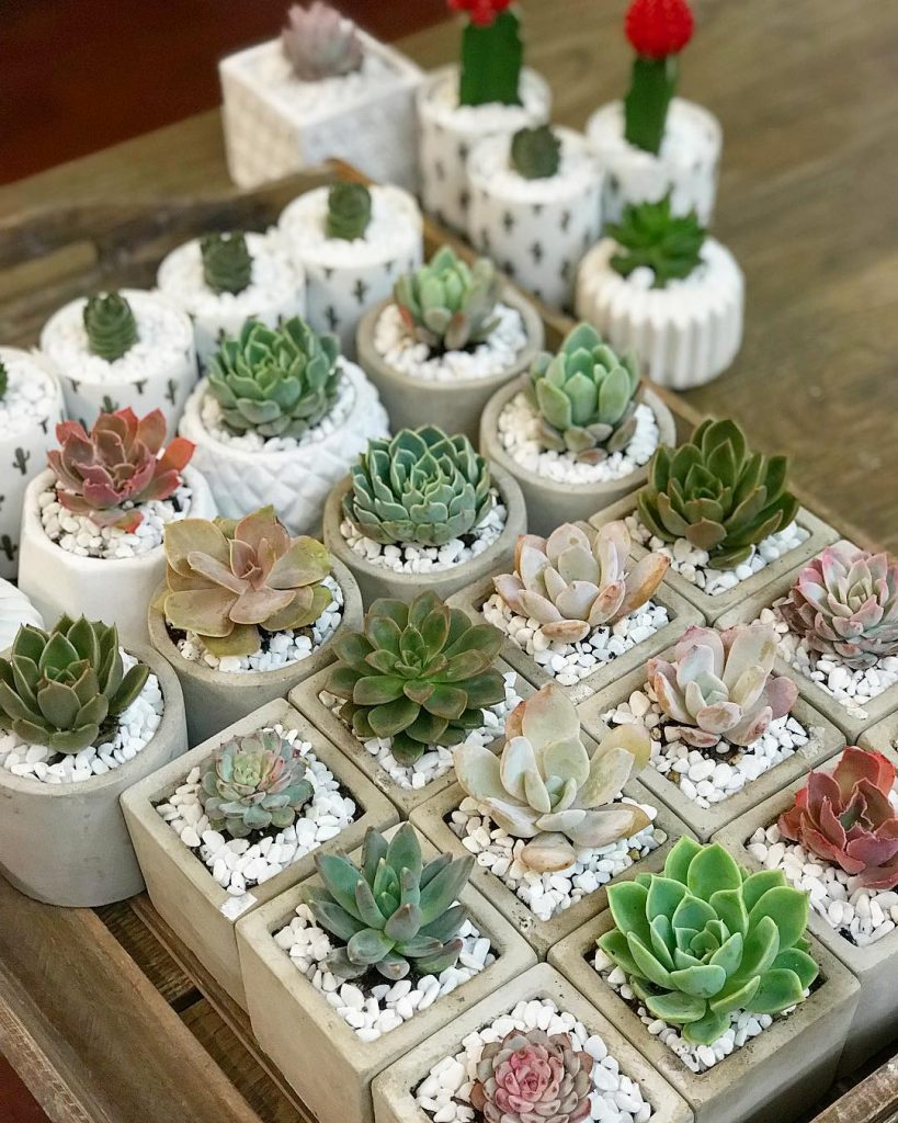 Where to buy succulent plants
