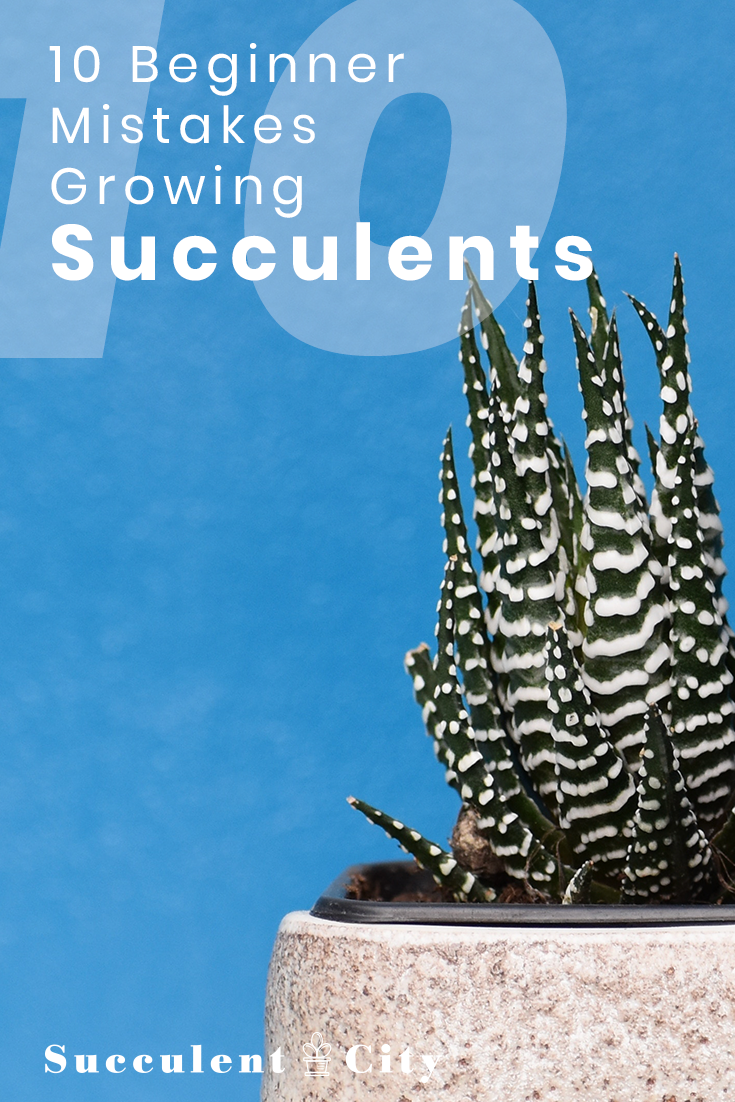 10 Beginner Mistakes when Growing Succulents