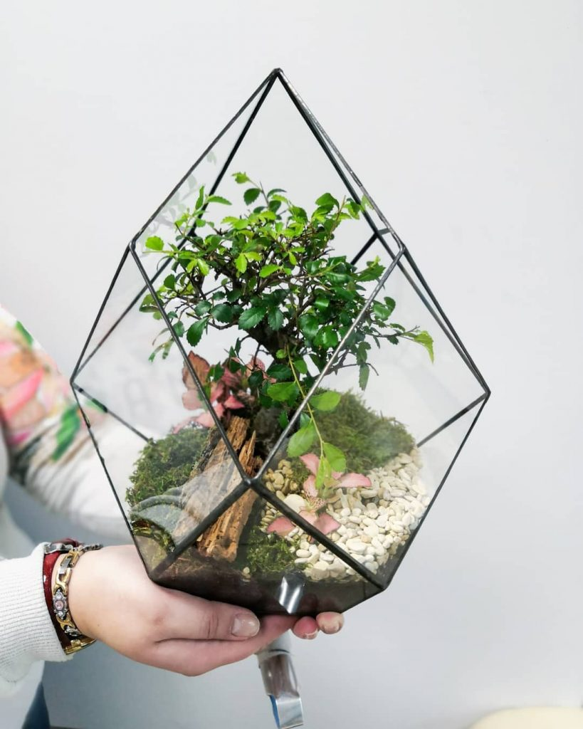 Succulent geometric planter