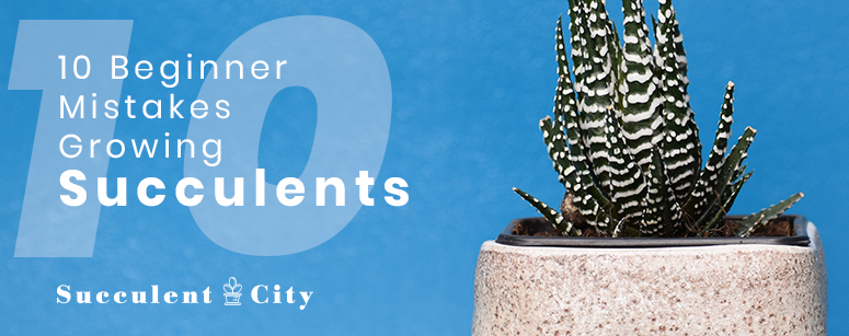 10 Beginner Mistakes for Growing Succulents