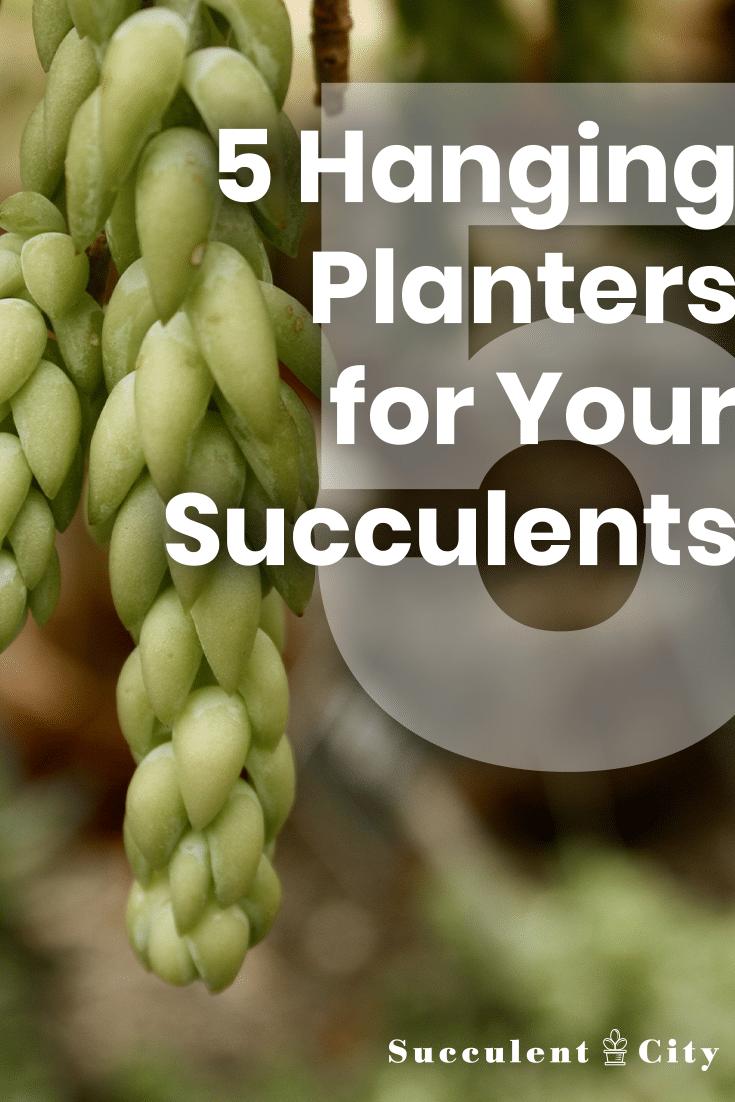Top 5 Hanging Succulent Planters Worth Having