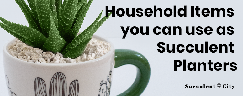 Household Items You Can Use as Succulent Planters