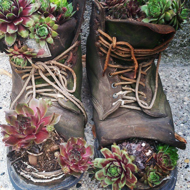 DIY rain boot succulent planter