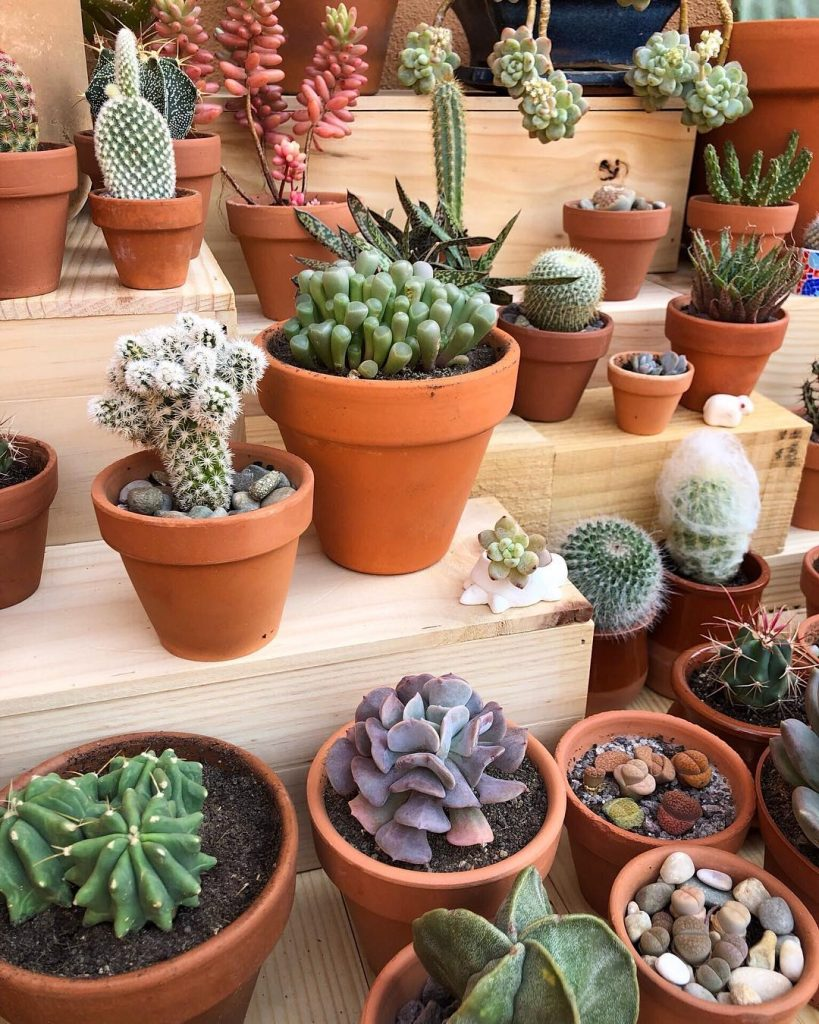 Succulents on top of wooden benches