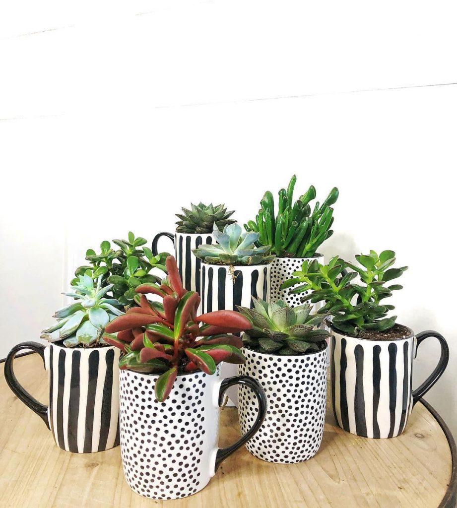 Coffee mug planters hidden cactus mug
