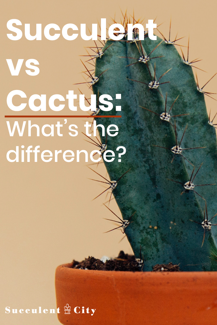 Succulents vs Cacti— What's the Difference?