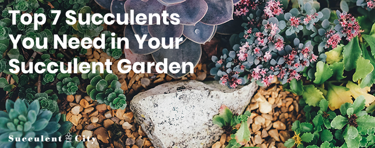 Top 7 Succulents You Need in Your Garden