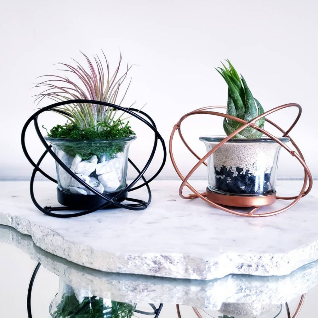 Tips for watering air plants