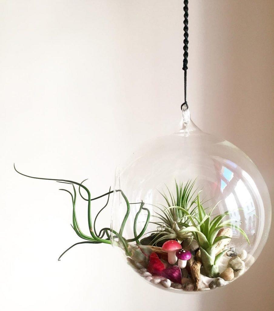 Watering air plants