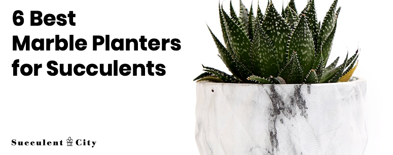 Best marble planters for succulents