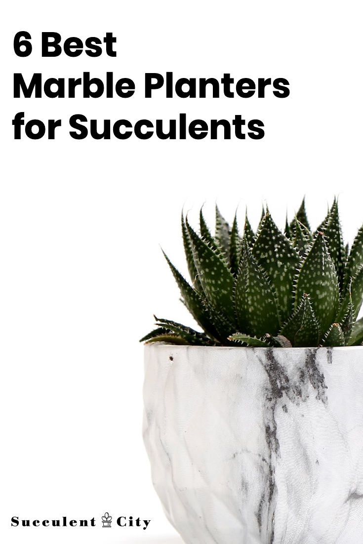 6 Best Marble Planters for Succulents