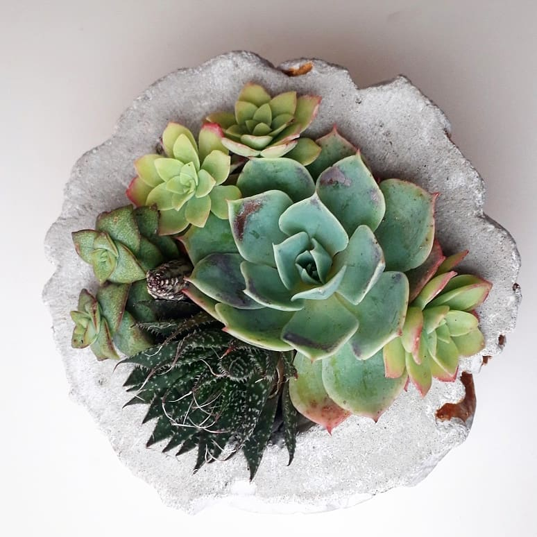 How to care to succulents in the winter
