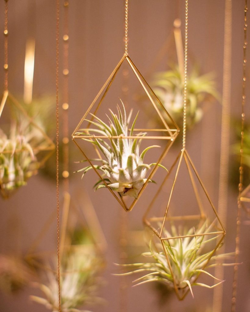 Everything about air plants