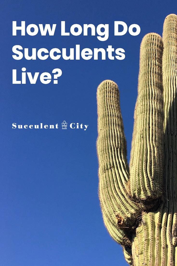 How Long Do Succulents Live?