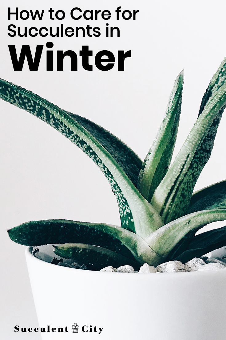How to Care for Succulents in the Winter
