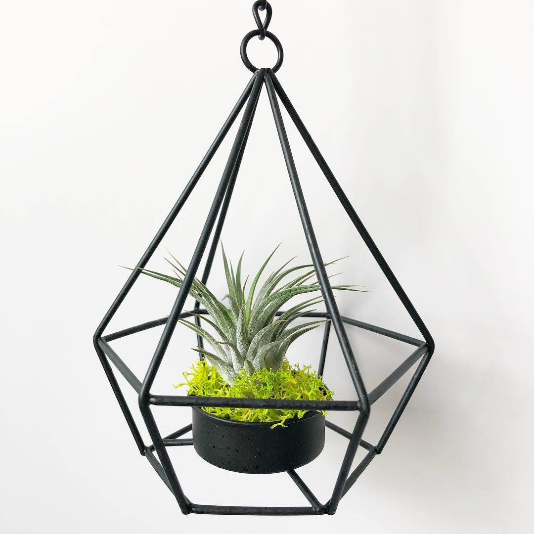 Ultimate guide on how to take care of air plants