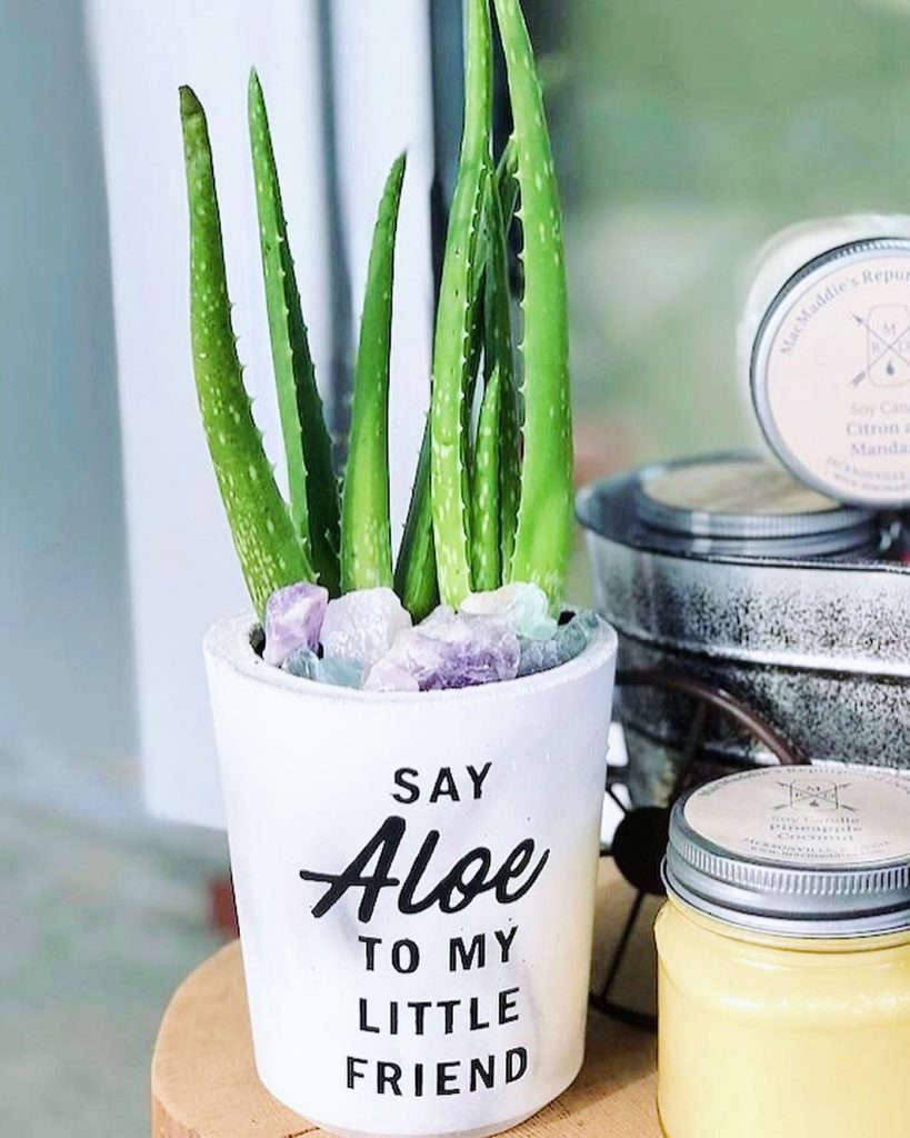 Aloe plant in cute little white planter