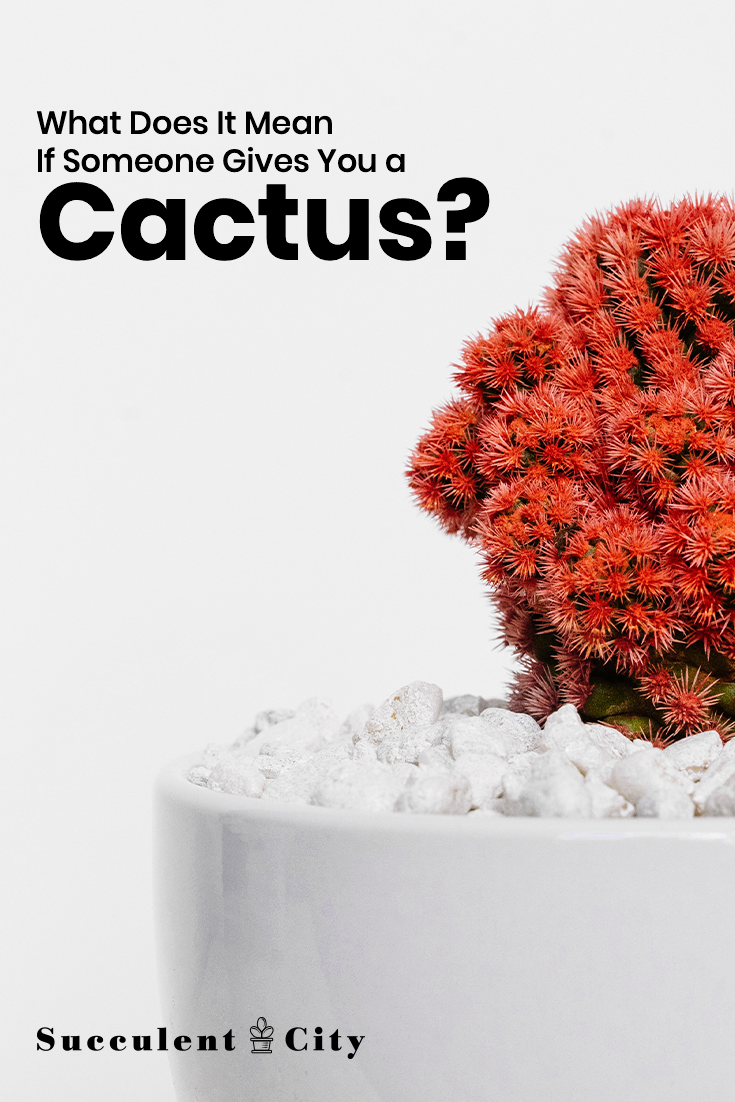 What Does it Mean if Someone Gives You a Cactus?