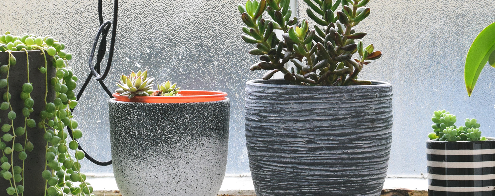 How to successfully grow indoor succulents
