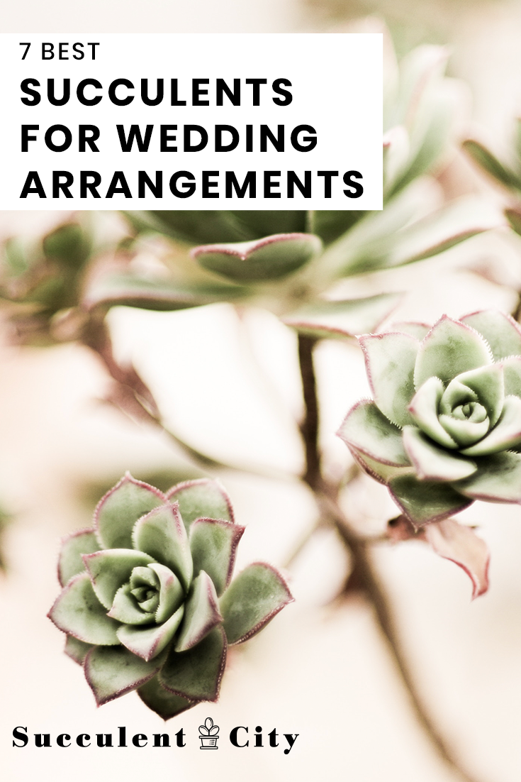 The 7 Best Succulents for Wedding Arrangements