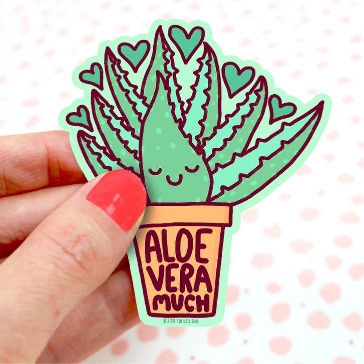 is aloe vera a succulent