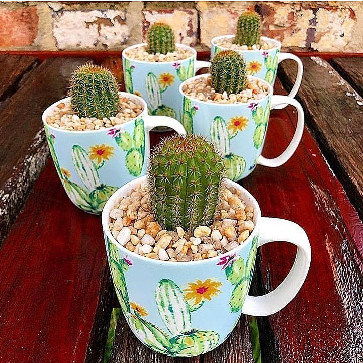 Are Cactus Thorns Poisonous?