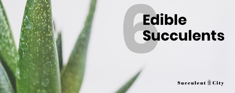 6 Edible Succulents