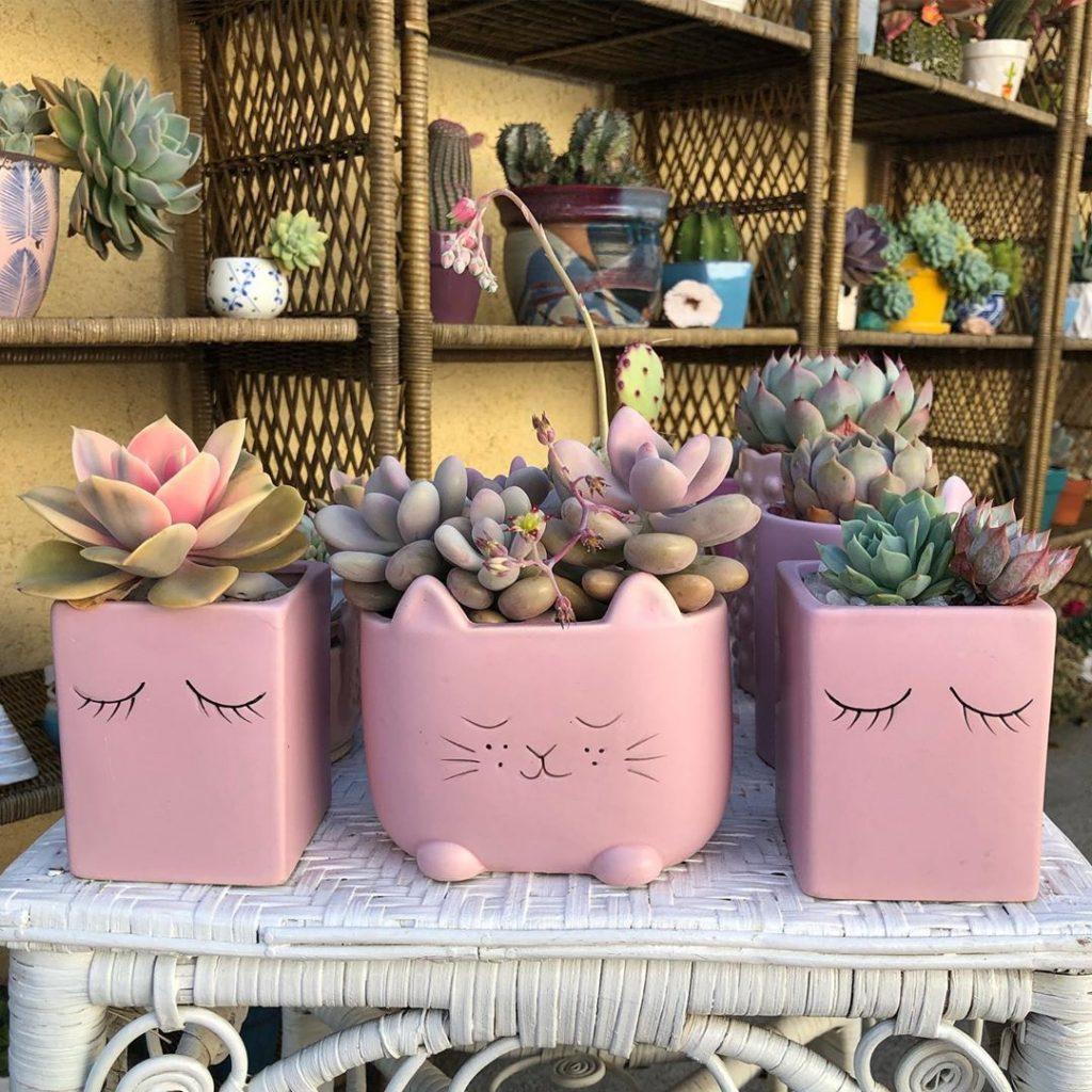 how to grow succulents indoors