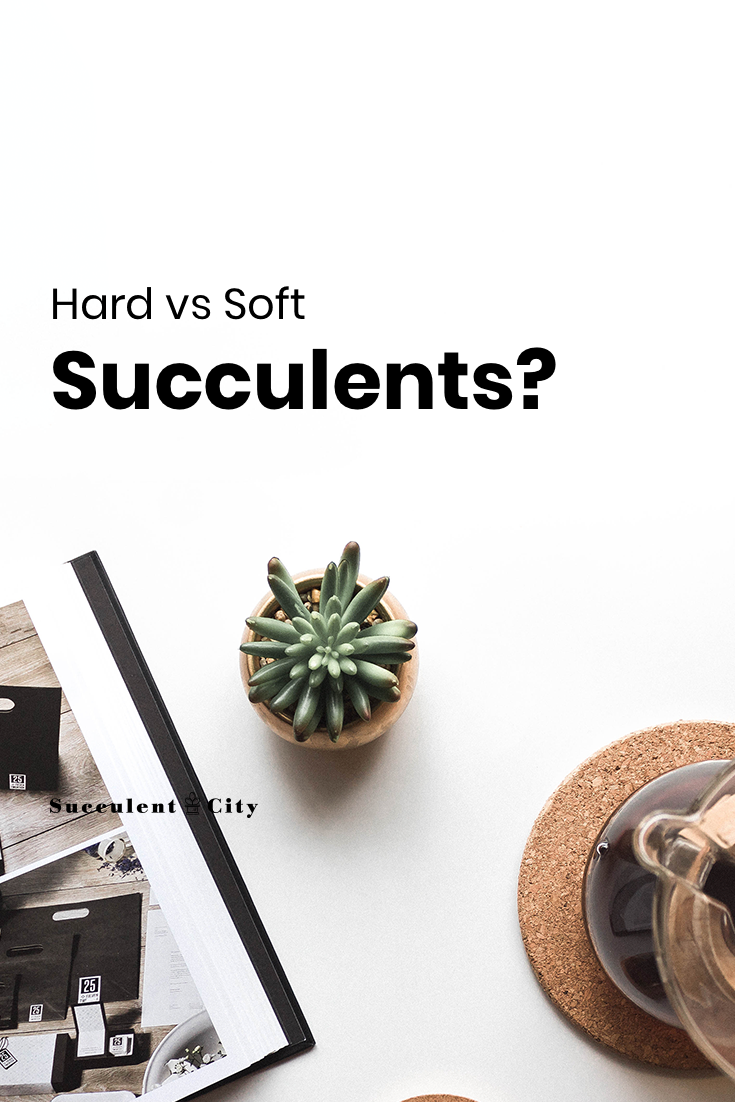 What's the Difference: Soft vs Hard Succulents