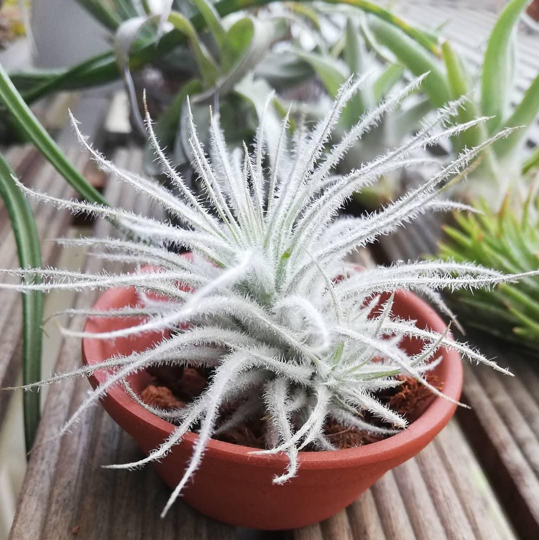 7 rare air plants