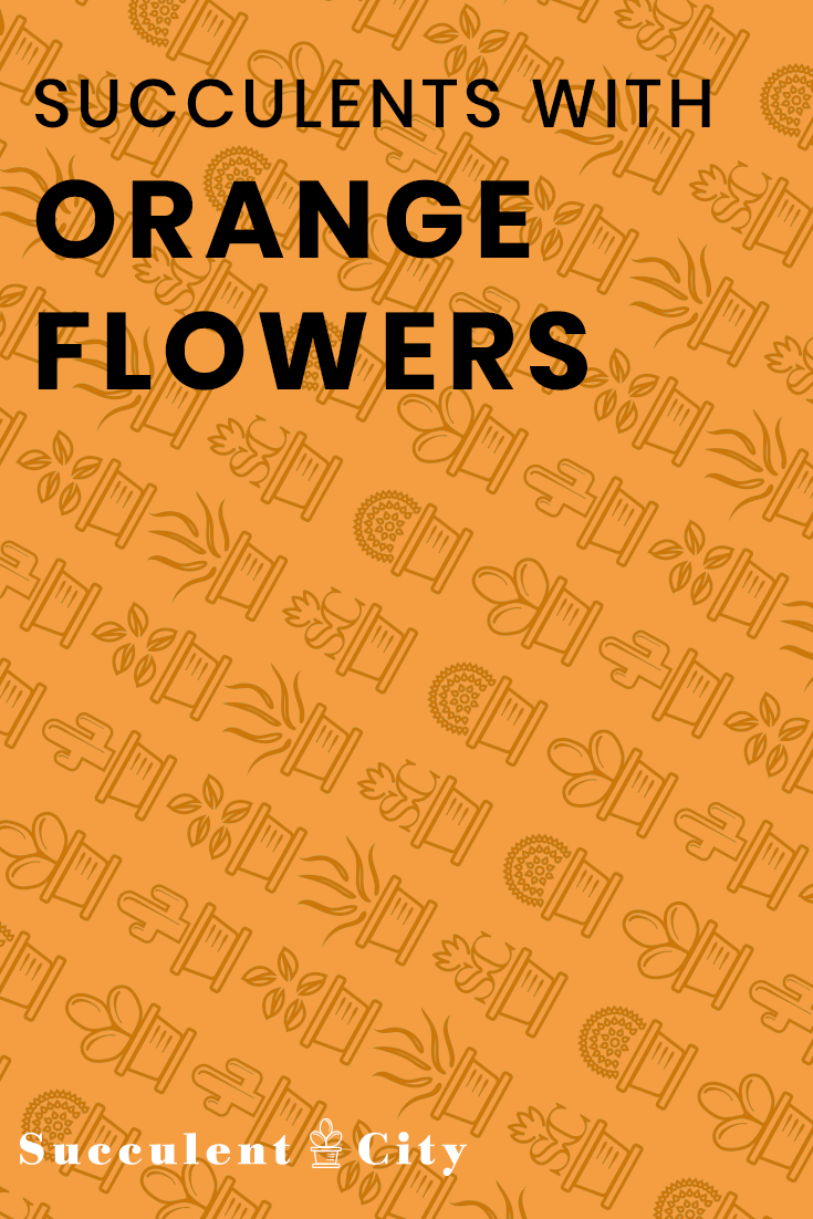 Definitive Guide to Succulents with Orange Flowers