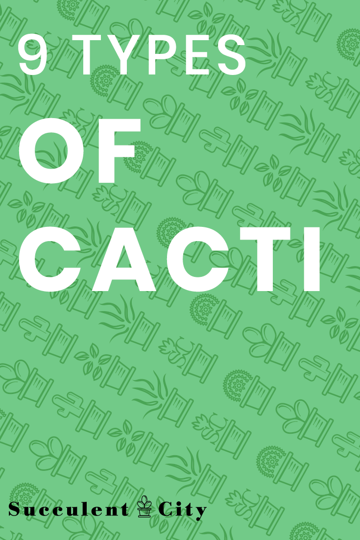9 Types of Cacti for Succulent Lovers