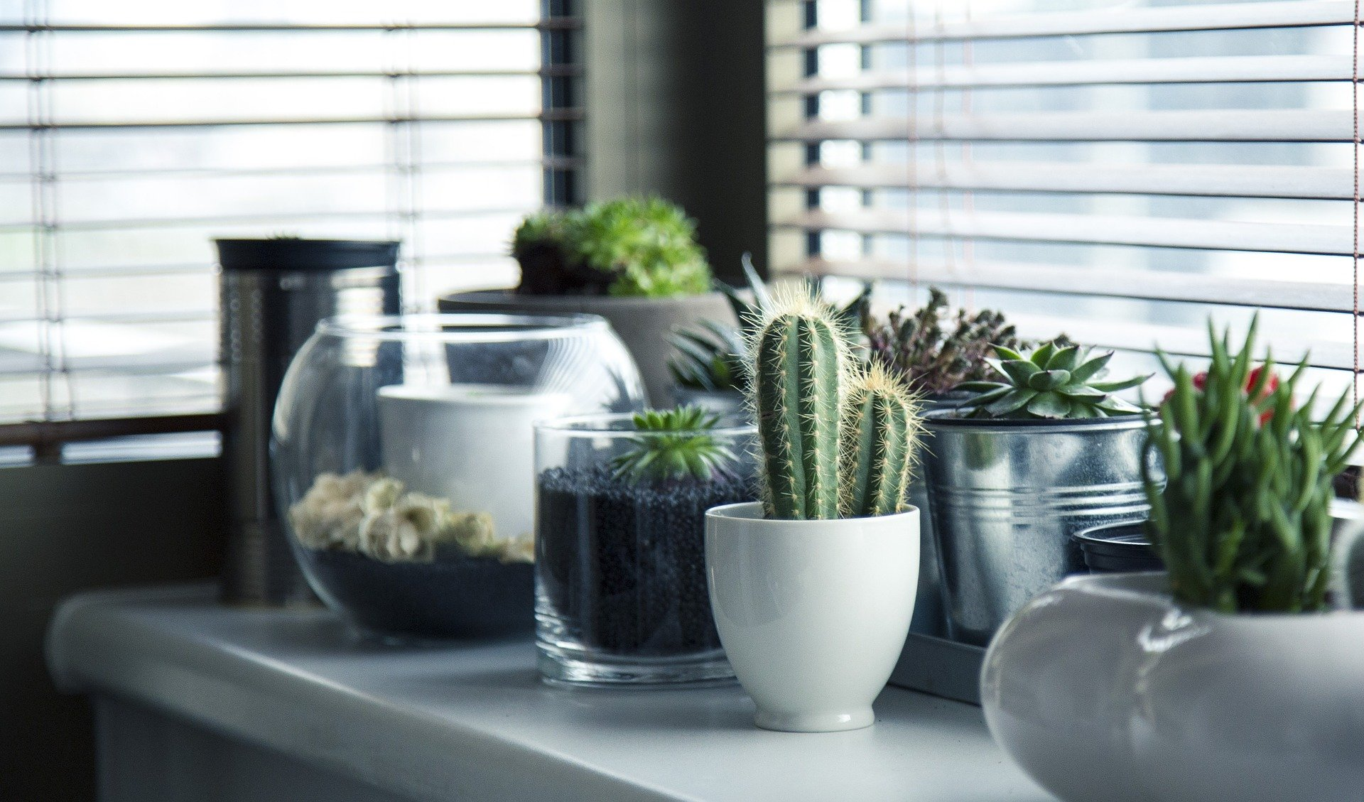 Choosing the Right Pot for Your Succulents