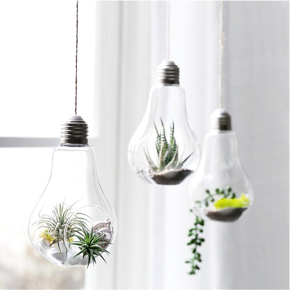 top terrariums for air plants