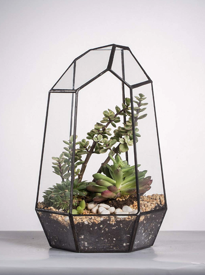 top terrariums for air plants