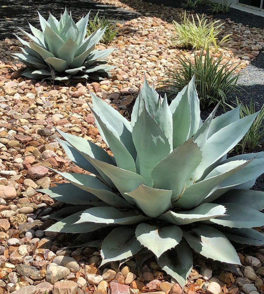 5 Best Outdoor Succulents Improve Your Garden Scenery Now