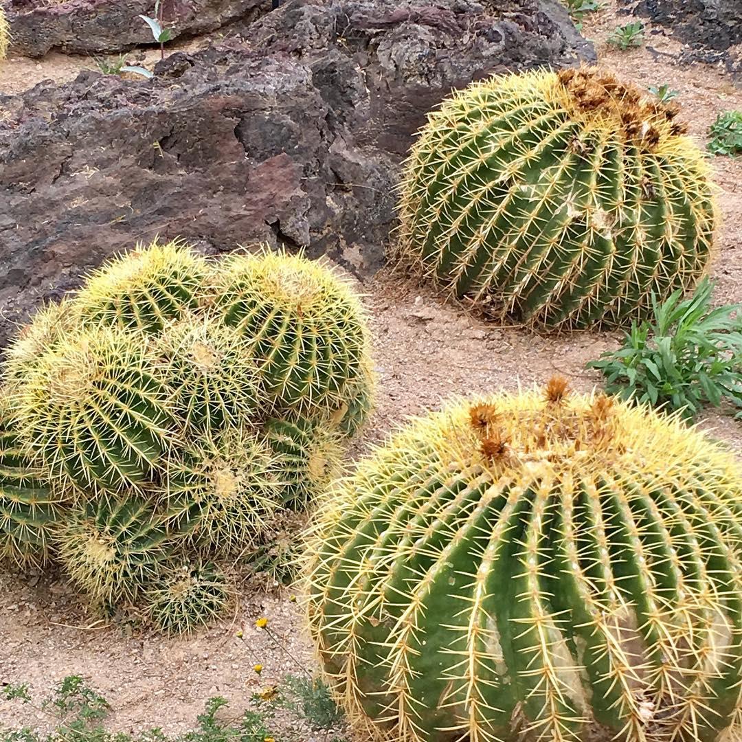 5 Best Outdoor Succulents